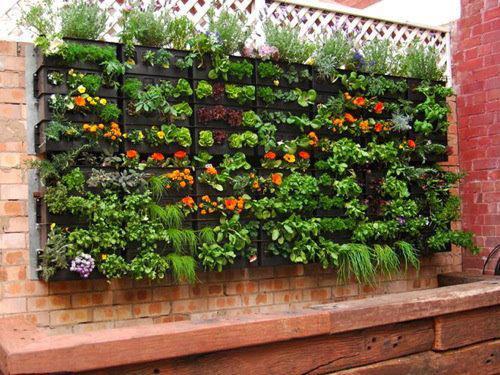 Curso huerto ecológico y jardines verticales
